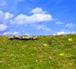 Wild-Meadow-Spring