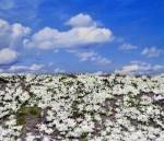 Snowy-Meadow