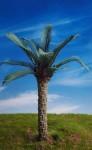 1-35-Oil-Palm