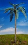 1-35-Common-Palm