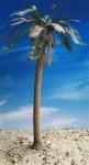 1-35-Date-Palm