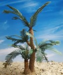 1-35-Cycad-Palm