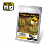 COMMON-SEDGE