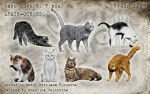 1-16-CatsSet3