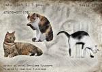 1-35-CatsSet1