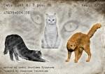 1-35-CatsSet2