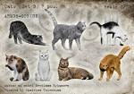 1-35-CatsSet3